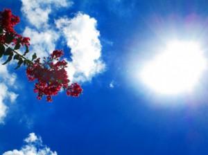 夏の乾燥対策